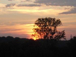 Abendhimmel mit Sonnenuntergang in Renchen/Ortenau mit Baum im Vordergrund
