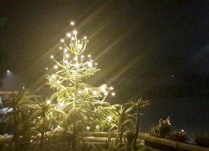 Beleuchteter Tannenbaum mit Schnee am Abend