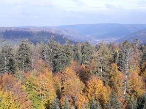 Aussicht vom Baumwipfelpfad über den Herbstwald beim Ausflug nach Bad Wildbad